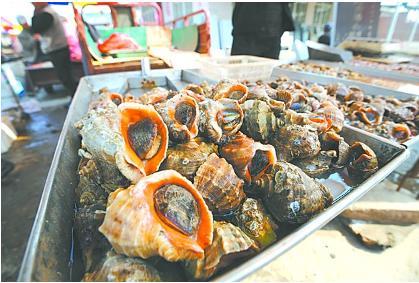 山东青岛七成海螺来自外地