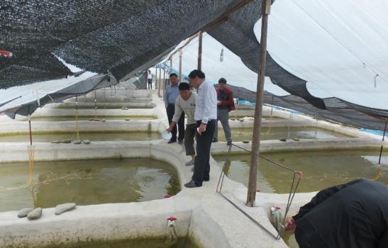 批量提供各种规格苗种的第一家生态养殖基地,它既向市场提供优质水花