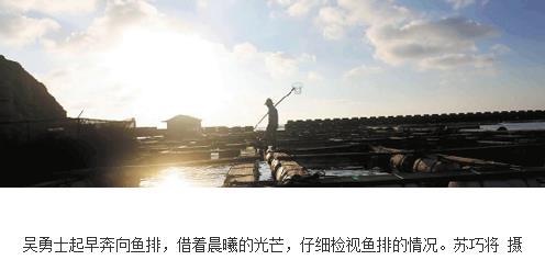 浙江温州平阳南麂岛大黄鱼从传统捕捞转向现代化养殖