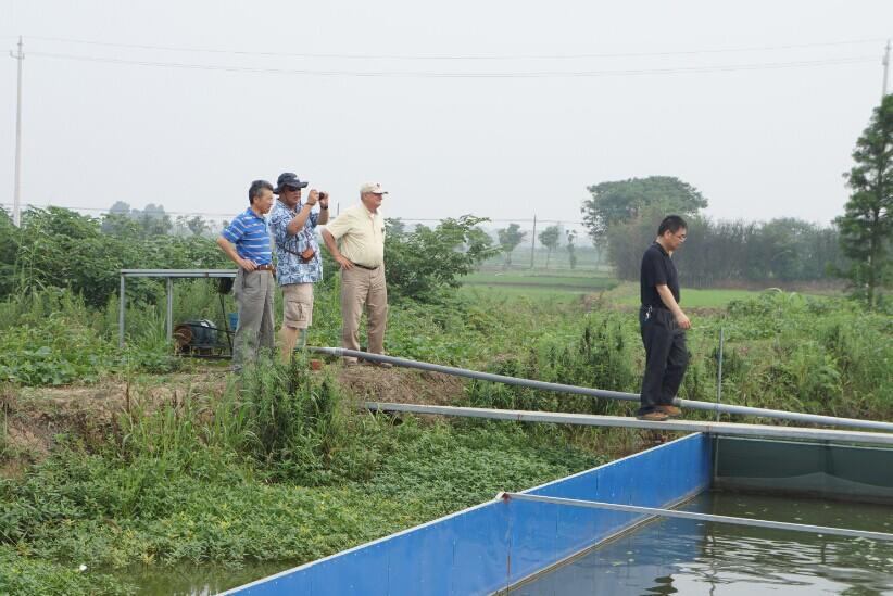 池塘施肥施什么肥_池塘施肥_池塘施肥能培育什么