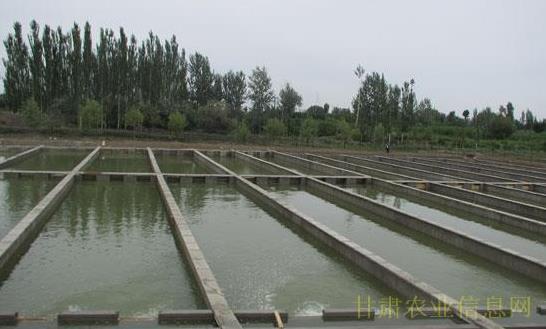甘肃酒泉市肃州区建成设施最大的流水马灯鲟鱼太阳能全市led799