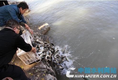 保德县10万尾黄河鲤鱼苗种投放黄河天桥库区