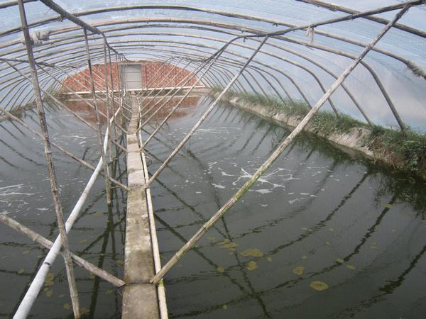 丰利镇是全县南美白对虾养殖大镇,现有大棚养殖近万亩,露天养殖5000多亩。如今,南美白对虾已成为该镇的农业支柱产业。然而火热养殖的背后,却隐藏着大规模养殖带来的诸多问题   上世纪90年代初期,丰利镇以环渔村为中心,开始尝试南美白对虾养殖。利用大棚养殖南美白对虾,实现了春秋两季收获。据该镇技术推广员王祥介绍,当时的亩产效益就达到3000元,远远高于种植效益,于是全县首家南美白对虾养殖合作社诞生。随着多年发展,丰利镇养虾已形成规模,其中光荣村、环渔村、环农村成为养虾专业村。据统计,环渔村与光荣村的养殖