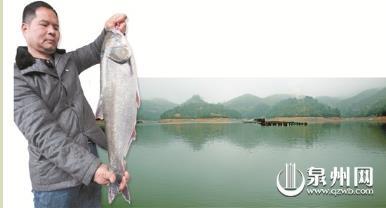养鱼先种树的勤劳夫妇 &nbsp&nbsp&nbsp&nbsp在承包水库养鱼之前