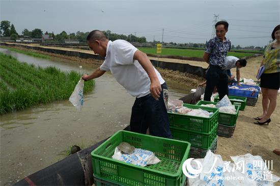 养鳖池中种植水葫芦和搭养鲢鱼对改善水质效果的研究