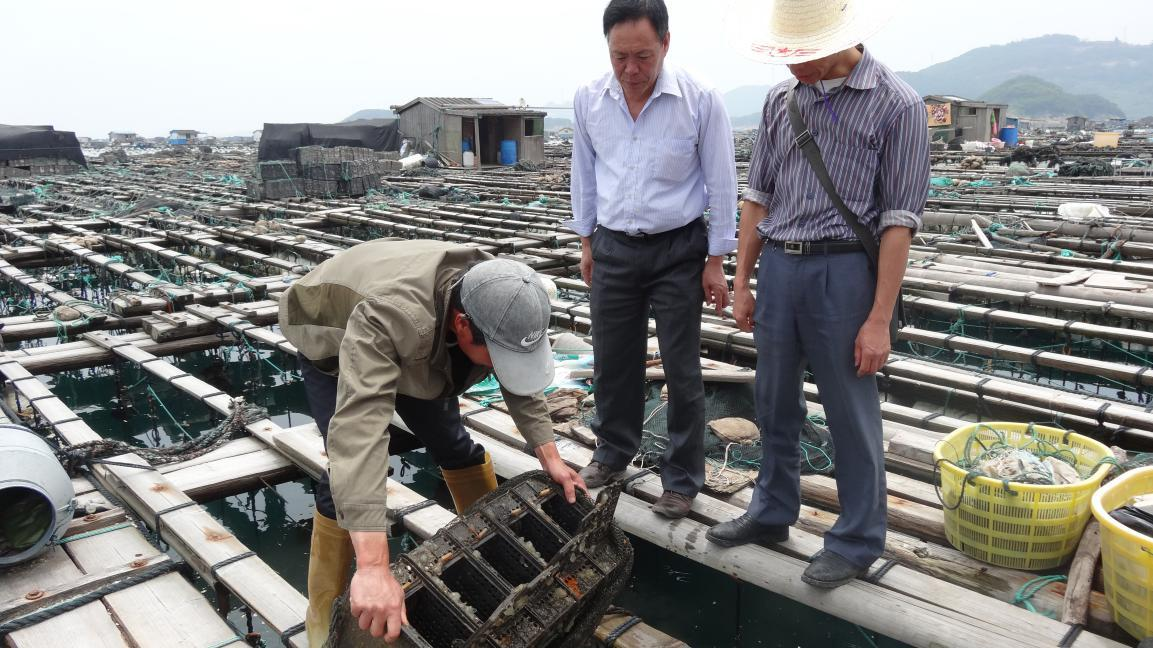 福建福州连江县深入东洛岛鲍鱼养殖区开展病害监测工作