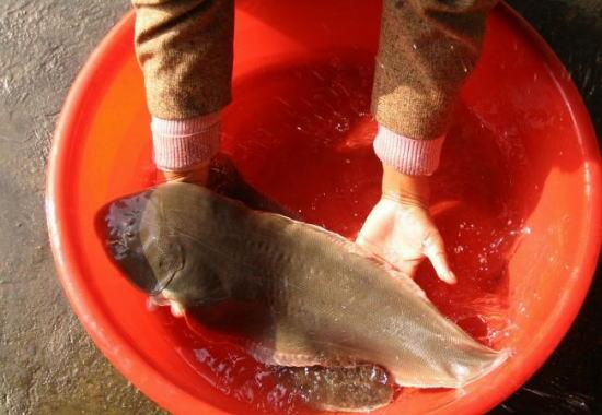 区的海鲜市场,发现这儿的海产品种类繁多,但却很难见到鳎目鱼的身影.