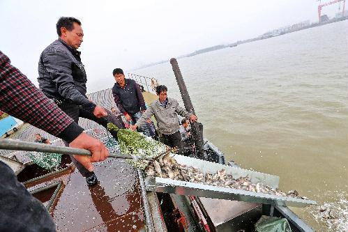 江苏靖江市开展2015年国家级水产种质资源保