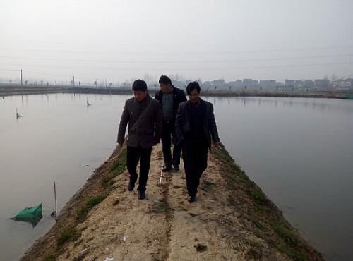 安徽滁州市水产站组织考察学习来安县青虾养殖