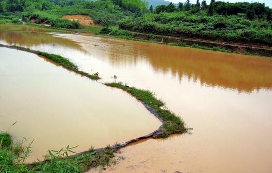 大宗淡水鱼体系曾令兵研究员谈洪涝灾害后恢复