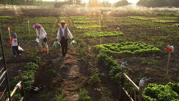 比如亲手收获绿色农产品,亲自喂养活泼可爱的小动物