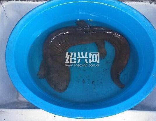 http://www.shuichan.cc/upload/news/news/n2016112109093070.jpg