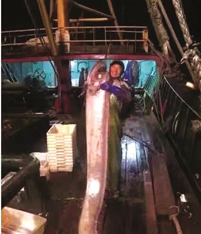 浙江宁波市象山县一渔老大捕获2米多长皇带鱼 在海上就被人买走