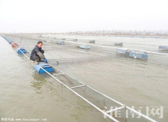 安徽淮南采煤沉陷区综合利用新途径 大水面网箱养殖鳜鱼