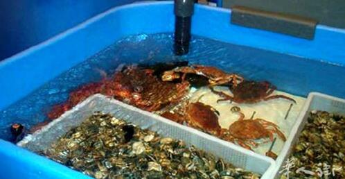 因鱼缸里有死了的虾蟹类水产,也就是25公斤的变质水产品,意大利carpi