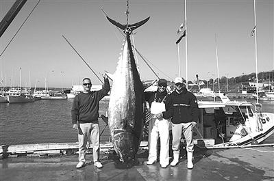 舟山攻克保鲜技术 杭州宁波都可以买到顶级金枪鱼