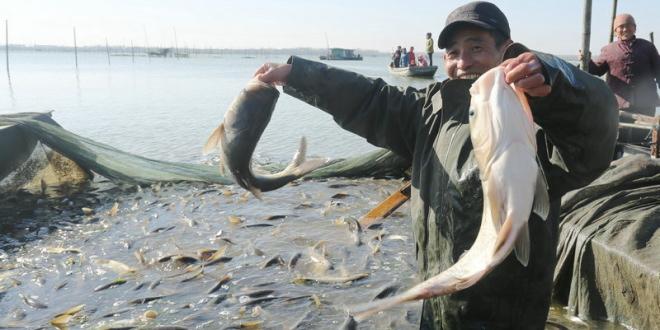 安徽滁州明光:女山湖冬捕开始 鱼儿鲜肥美