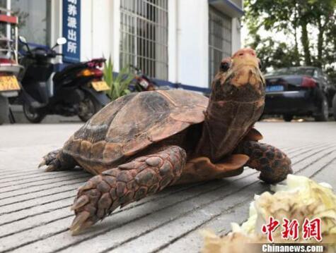 云南西双版纳一市民饲养国家二级保护动物欲放生 被警方制止