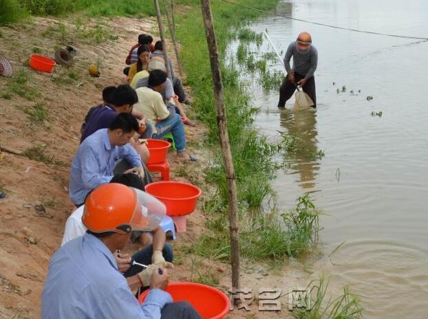 这技术厉害了!生态防控罗非鱼养殖病害
