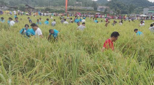 湖南吉首市:马颈坳雅沙村举办首届稻花鱼节