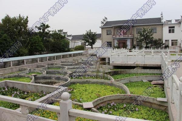 """这座""""业余""""特种龟类博物馆 现在养殖的黄缘闭壳龟等品种数量居全国第一"""