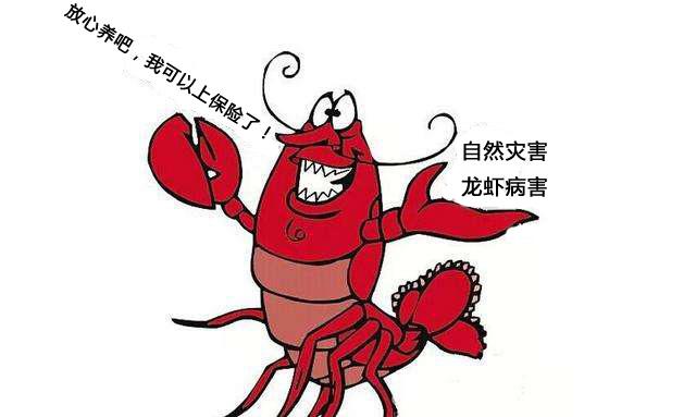 小龙虾养殖保险来了,遇到自然灾害或者病害死