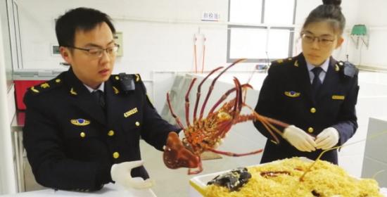 湖南首次进口澳大利亚龙虾 墨西哥活水蚌波士顿龙虾等高档海鲜近期也有望进口
