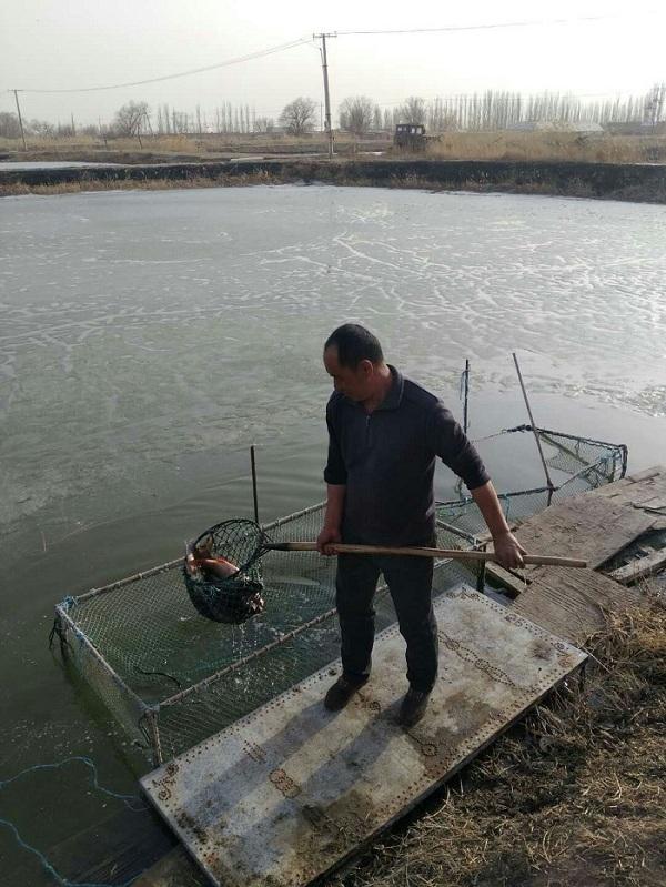 包头市水产站开展春季地产水产品质量安全大检