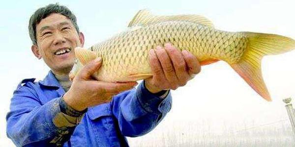 山东聊城东阿:黄河鲤鱼香 畅游到四方