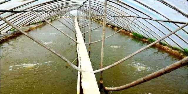 江苏南通:挖农田养殖南美白对虾曾一度失控,这样的粗放养殖模式终于改了