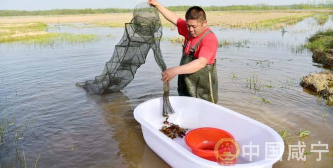 湖北咸宁赤壁市车埠镇小龙虾跳上致富路