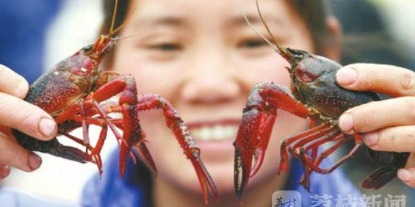 """江苏淮安:清明后小龙虾""""供需两旺"""" 市场价格逐渐下降"""