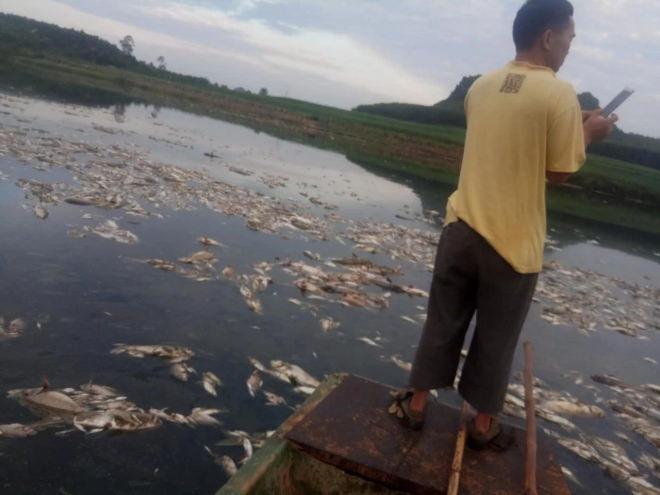 大快人心毒死50多万斤鱼致养殖户损失300多万元的