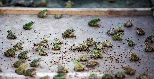 """江苏常熟:致富有""""新招"""" 稻田里长出了鱼虾蟹鸭 还能养青蛙"""
