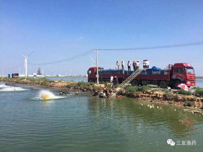 成都三友药业苏北区域水产养殖一线调查报告
