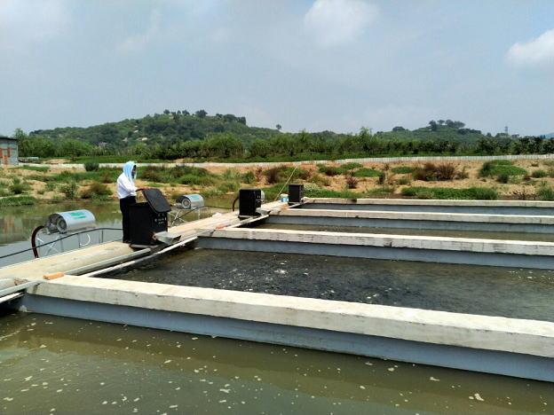 福州马尾琅岐池塘循环水养殖项目进入试运行阶段