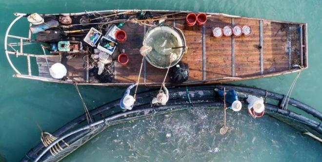 温州胡志叠:昔日闯荡世界缔造水产王国 如今成深海黄鱼养殖之父