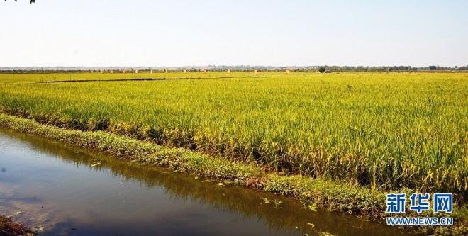 """稻蟹养殖,把""""稻虾共作""""产业作为促进农业结构调整,农民增收致富,农村"""