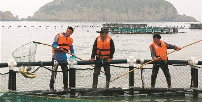 浙江台州玉环芦浦:耕海牧渔第一镇 靠海吃海闯出致富路