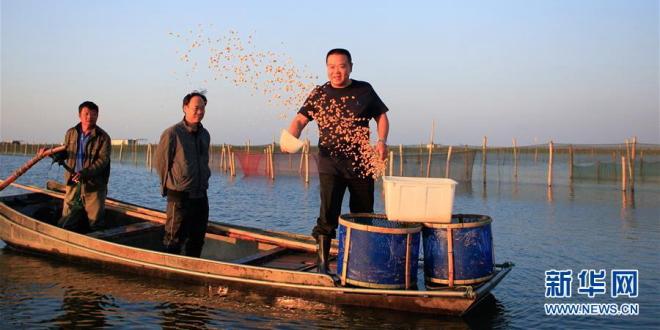 一个阳澄湖大闸蟹传统养殖户的故事