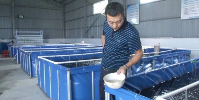 室内淡水养殖南美白对虾,1年轮作6季,210方水体每年产量1.2万斤