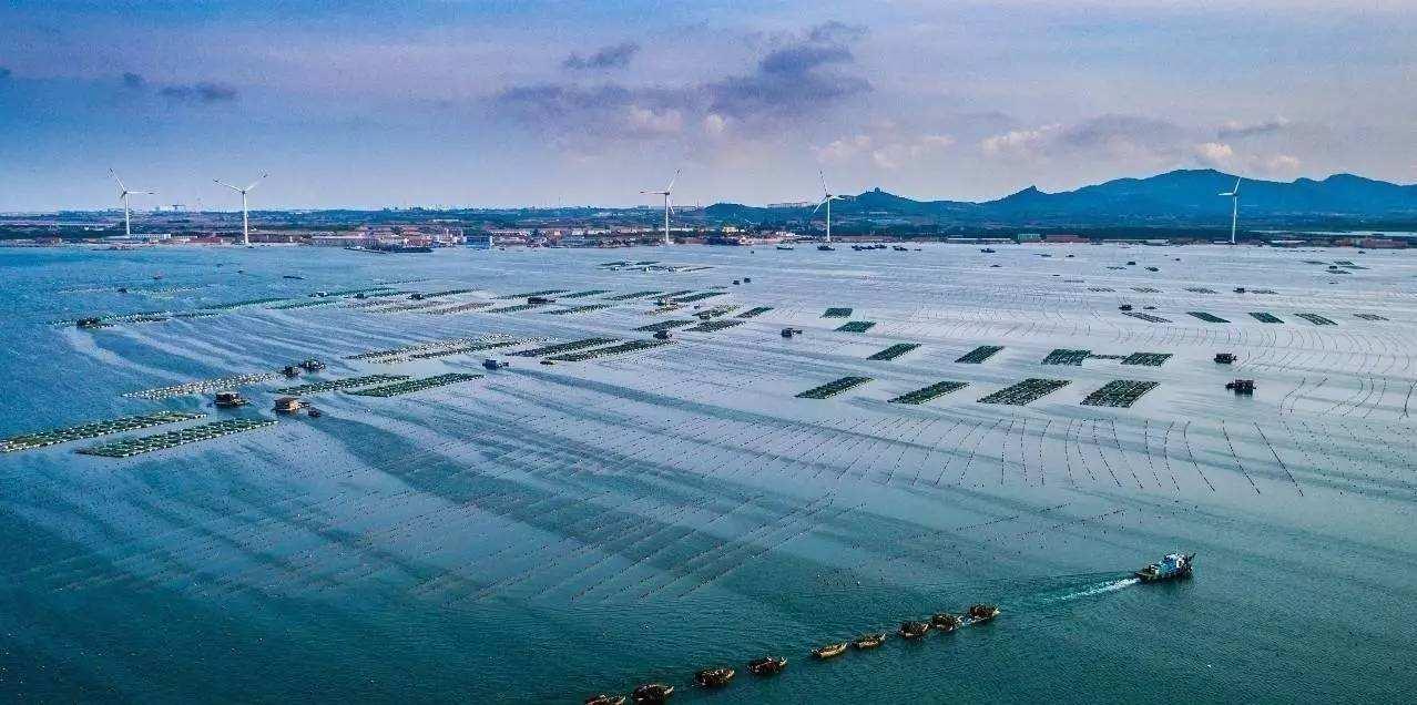 加快推进海洋牧场建设促进海洋渔业转型升级