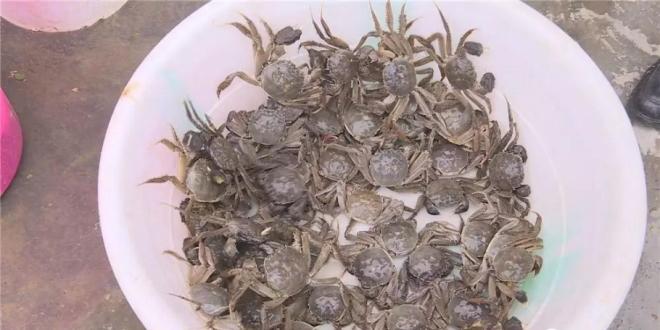 贵州遵义市湄潭县推进特色水产养殖 加快渔业健康发展