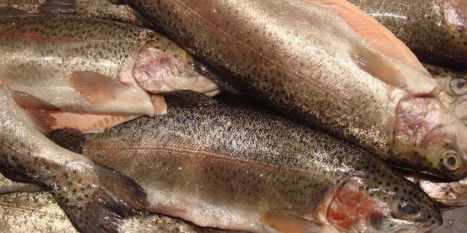 河北省冷水鱼产业发展形势及前景