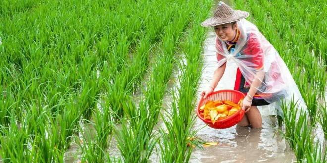 湖北打造700万亩稻渔综合种养区,建设1500万亩优质油菜保护区