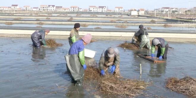"""湖北河蟹养殖技术日趋成熟,产值106亿元,但湖北养蟹之""""痛""""谁能懂?"""