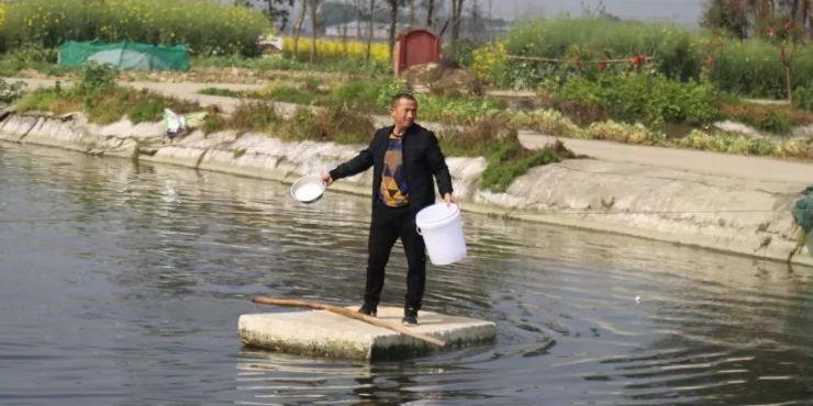 干一行爱一行钻一行,他养的鱼,在成都市场上都供不应求!