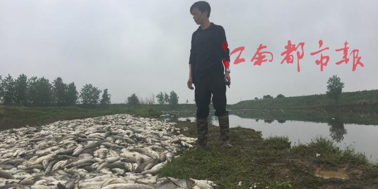 80亩鱼塘10万斤鱼离奇死亡,腐臭味熏人,警方已介入调查!