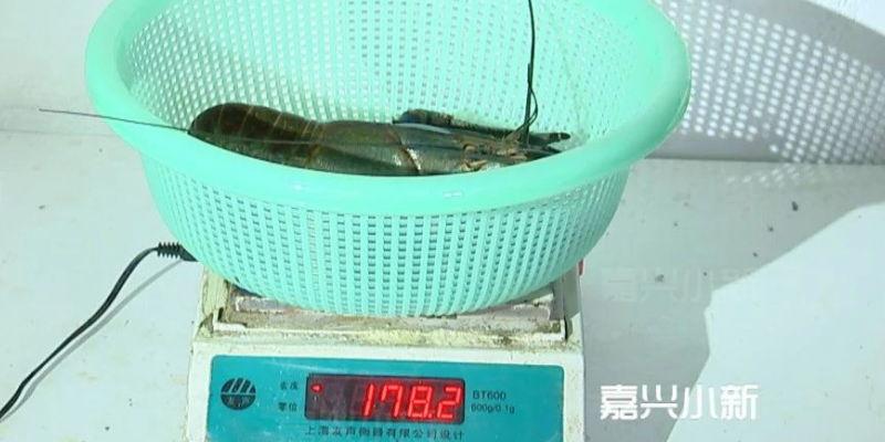 浙江嘉兴乡下养出澳洲淡水小龙虾:最高80元一斤 专家认为有钱途