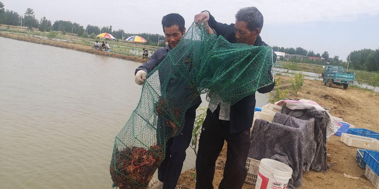 安徽蚌埠五河:养殖小龙虾 扶贫新路子